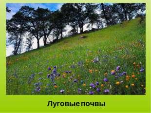 Луговые почвы