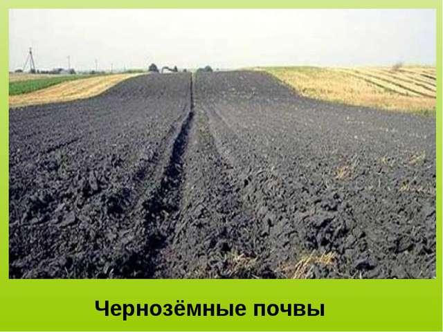 Чернозёмные почвы