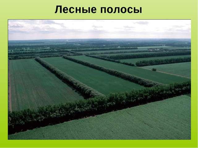 Лесные полосы
