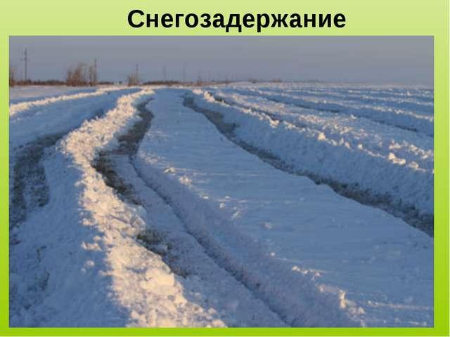 Снегозадержание