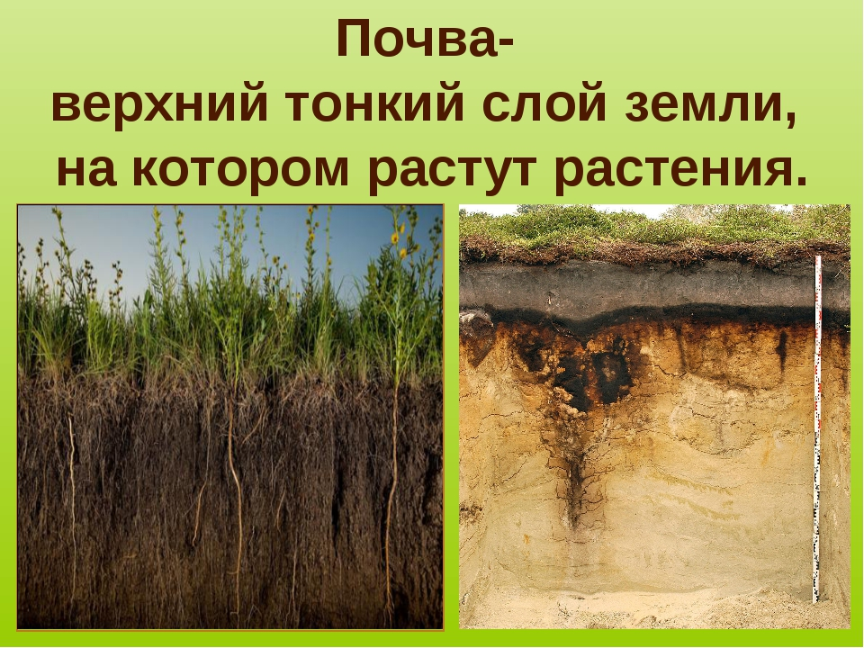 Почва- верхний тонкий слой земли, на котором растут растения.