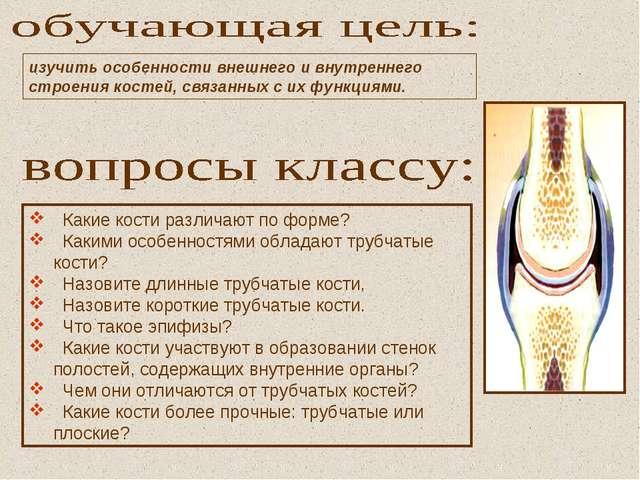 Какие кости различают по форме? Какими особенностями обладают трубчатые кост...