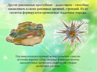 Другие раковинные простейшие – радиолярии – способны накапливать в своих рако