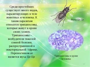 Среди простейших существует много видов, паразитирующих в теле животных и чел