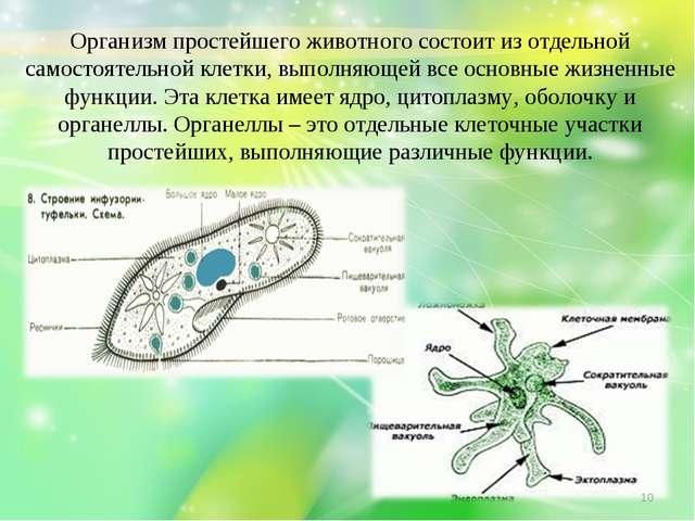 Организм простейшего животного состоит из отдельной самостоятельной клетки, в...