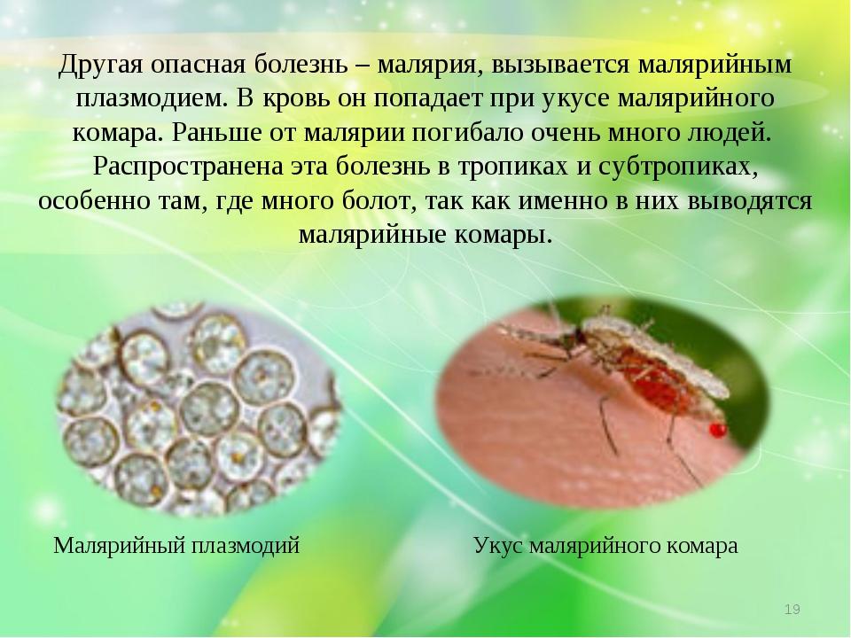 Другая опасная болезнь – малярия, вызывается малярийным плазмодием. В кровь о...