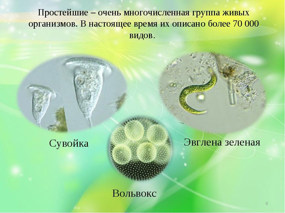 Простейшие – очень многочисленная группа живых организмов. В настоящее время...