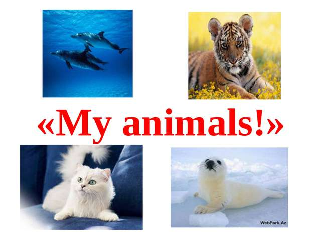 «My animals!»