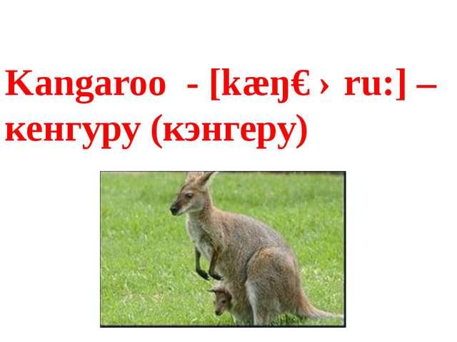 Kangaroo - [kæŋɡəru:] – кенгуру (кэнгеру)