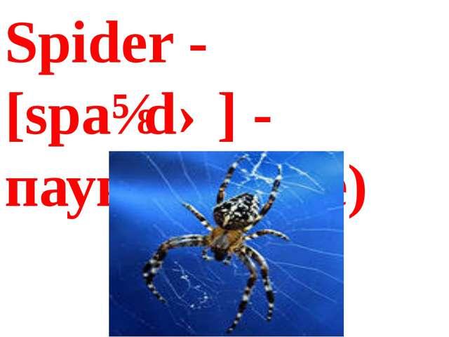 Spider - [spaɪdə] - паук(спайде)