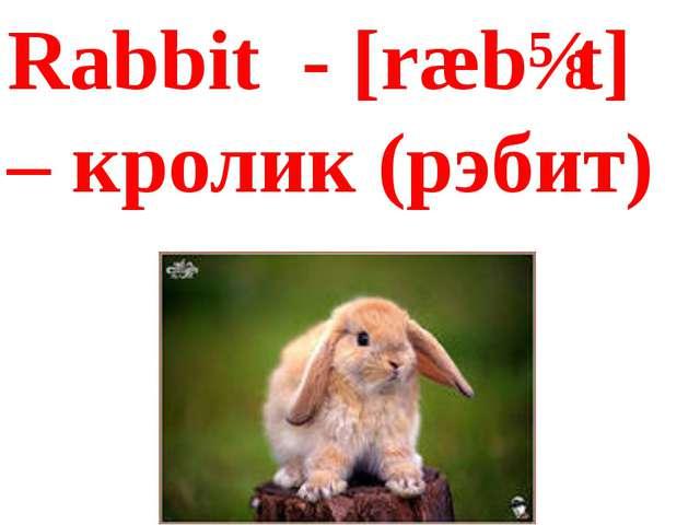 Rabbit - [ræbɪt] – кролик (рэбит)