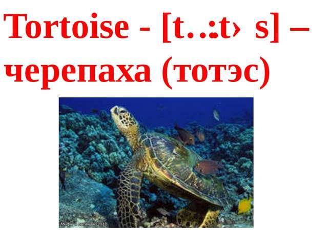 Tortoise - [tɔ:təs] – черепаха (тотэс)