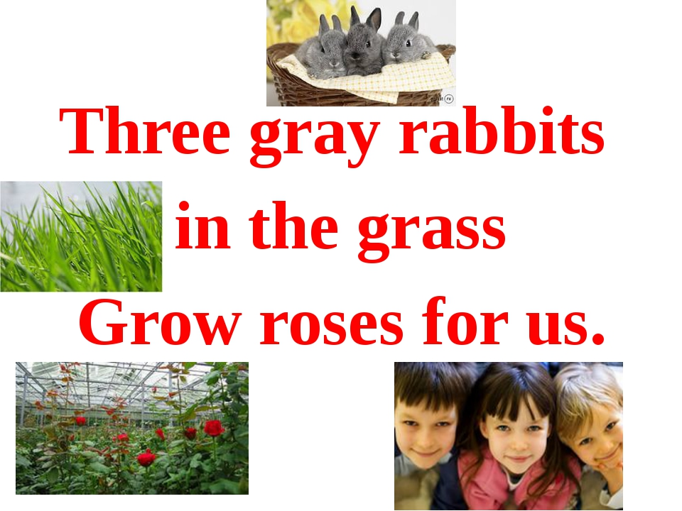 Three gray rabbits in the grass Grow roses for us.
