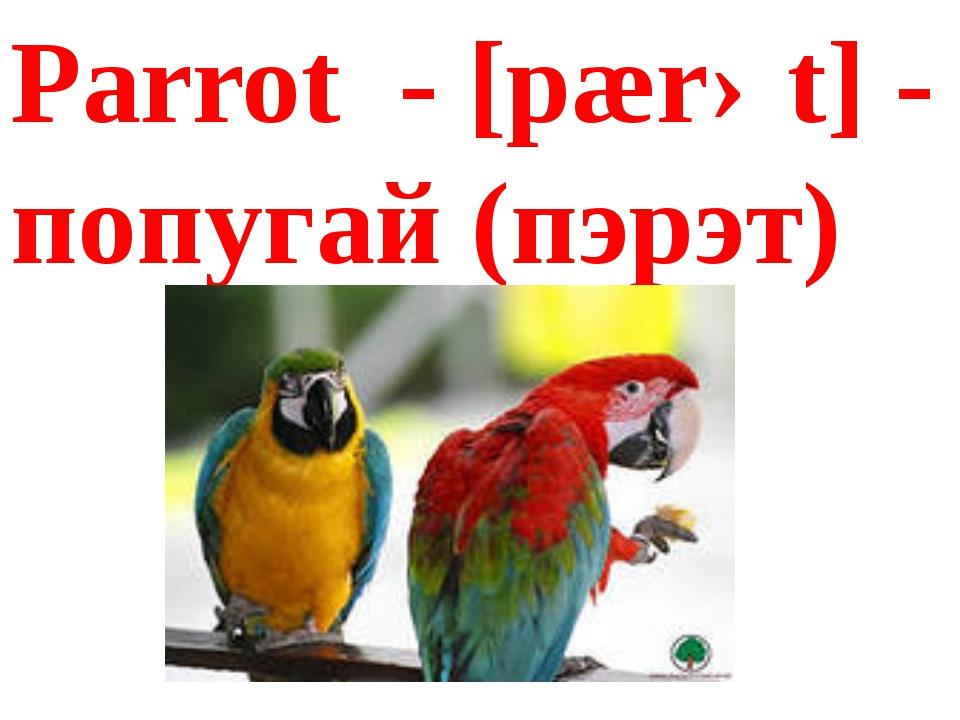 Parrot - [pærət] - попугай(пэрэт)