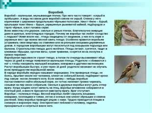 Воробей. Воробей – маленькая, неунывающая птичка. Про него часто говорят: «с