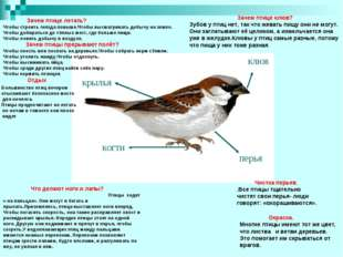 Что делают ноги и лапы? Птицы ходят « на пальцах». Они могут и бегать и прыг