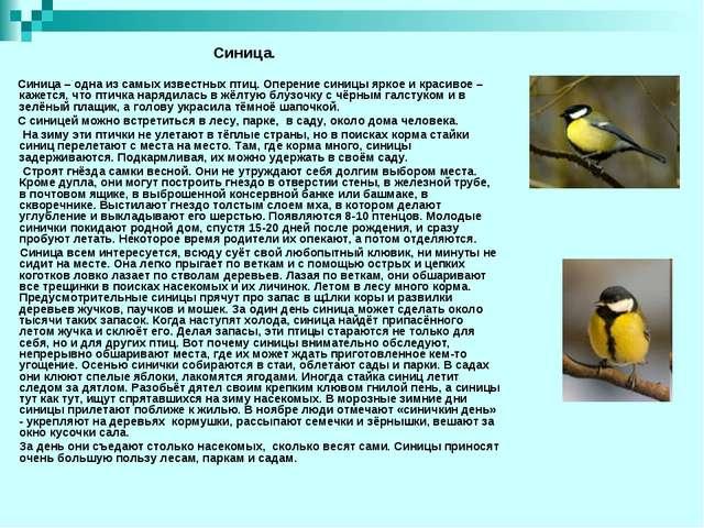 Синица – одна из самых известных птиц. Оперение синицы яркое и красивое – ка...