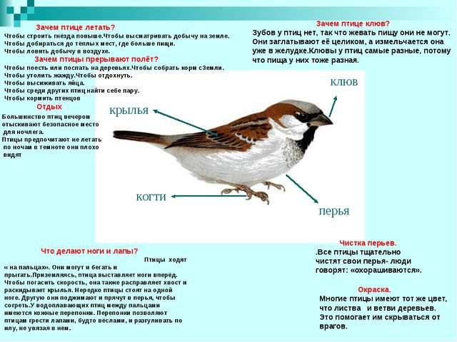 Что делают ноги и лапы? Птицы ходят « на пальцах». Они могут и бегать и прыг...