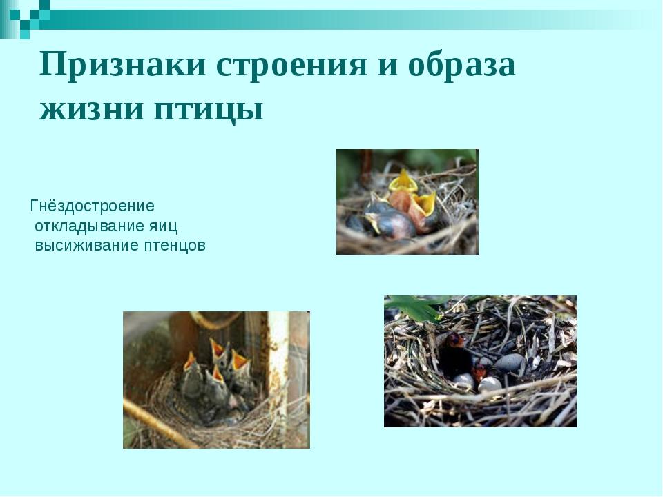 Признаки строения и образа жизни птицы Гнёздостроение откладывание яиц высижи...