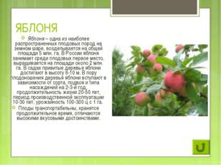 ЯБЛОНЯ Яблоня – одна из наиболее распространенных плодовых пород на земном ша