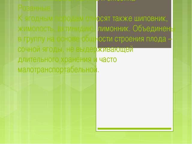 Ягодные породы в России размещены на площади около 140 тыс. га и входят в ра...