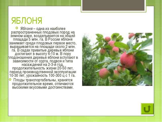 ЯБЛОНЯ Яблоня – одна из наиболее распространенных плодовых пород на земном ша...