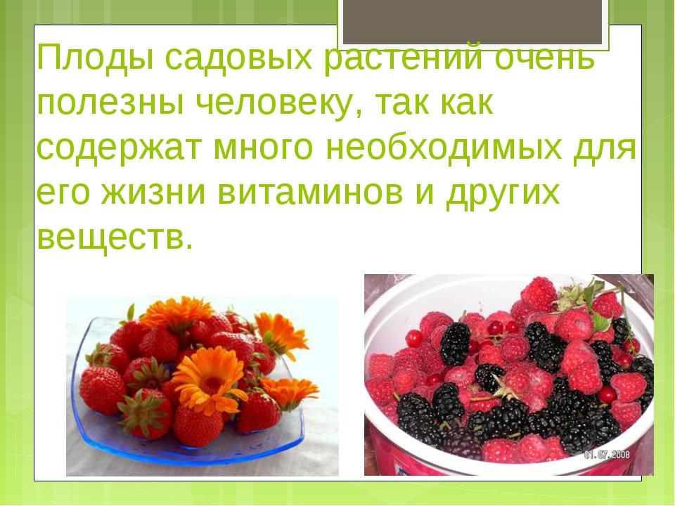 Плоды садовых растений очень полезны человеку, так как содержат много необход...