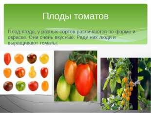 Плод-ягода, у разных сортов различаются по форме и окраске. Они очень вкусные