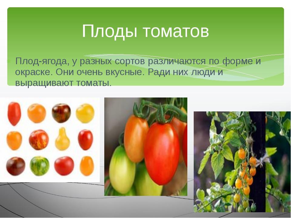 Плод-ягода, у разных сортов различаются по форме и окраске. Они очень вкусные...