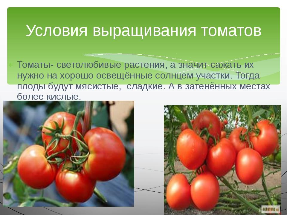 Томаты- светолюбивые растения, а значит сажать их нужно на хорошо освещённые...