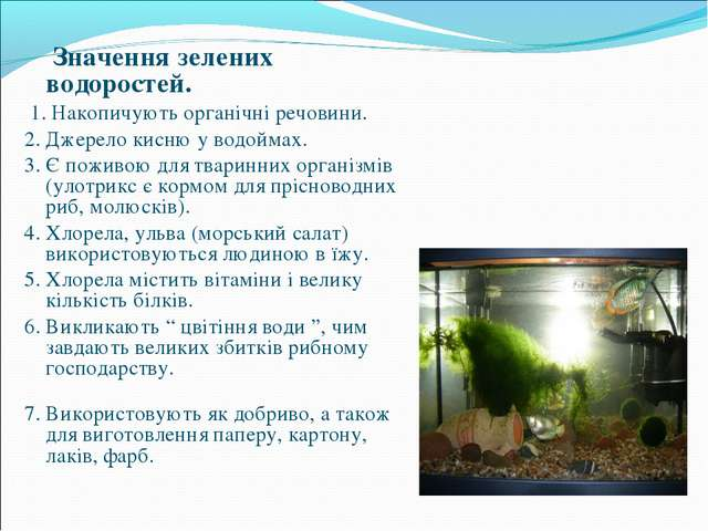 Значення зелених водоростей. 1. Накопичують органічні речовини. 2. Джерело к...