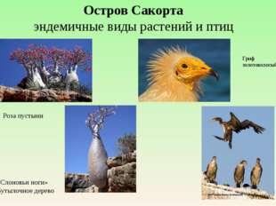 Остров Сакорта эндемичные виды растений и птиц Роза пустыни «Слоновьи ноги» Б