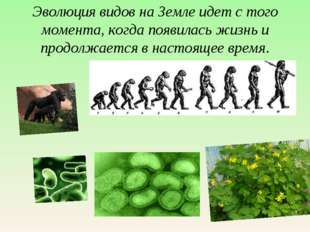 Эволюция видов на Земле идет с того момента, когда появилась жизнь и продолжа