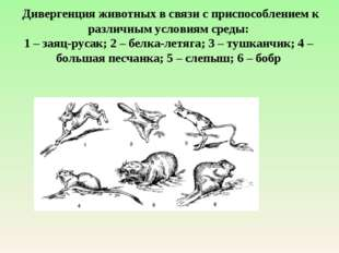 Дивергенция животных в связи с приспособлением к различным условиям среды: 1