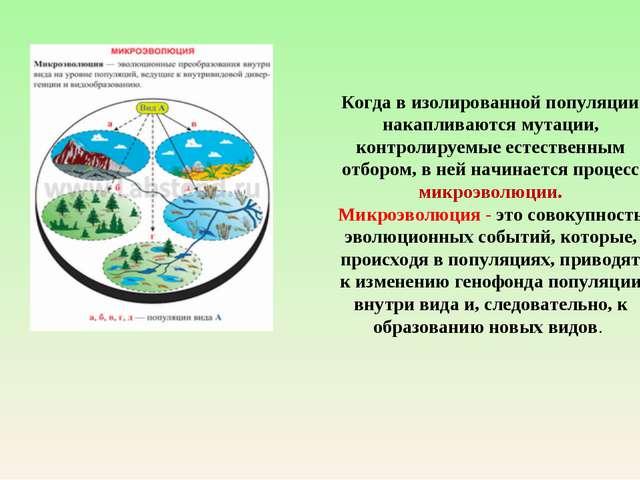 Когда в изолированной популяции накапливаются мутации, контролируемые естеств...