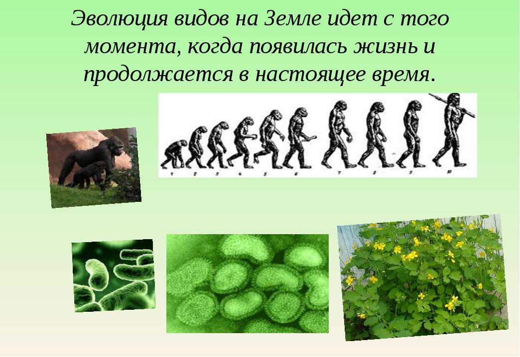 Эволюция видов на Земле идет с того момента, когда появилась жизнь и продолжа...