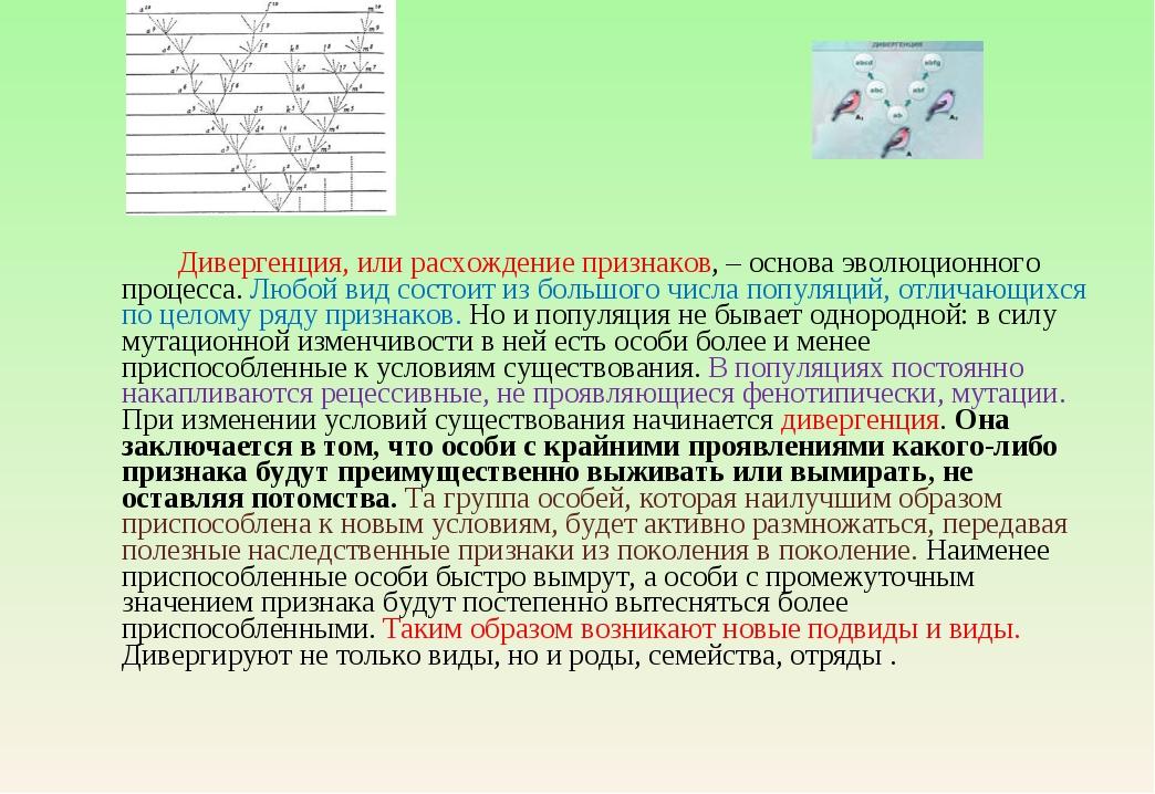 Дивергенция, или расхождение признаков, – основа эволюционного процесса. Люб...