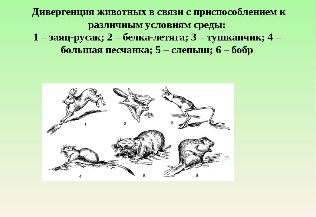 Дивергенция животных в связи с приспособлением к различным условиям среды: 1...