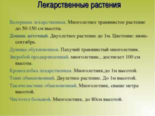 Лекарственные растения Валериана лекарственная. Многолетнее травянистое расте