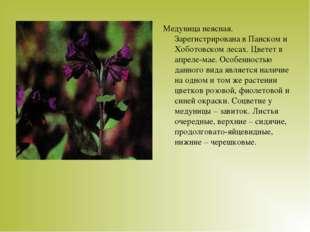 Медуница неясная. Зарегистрирована в Панском и Хоботовском лесах. Цветет в ап
