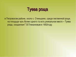 Туева роща в Петровском районе, около с. Стеньшино, среди лиственной рощи, на