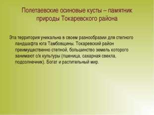 Полетаевские осиновые кусты – памятник природы Токаревского района Эта террит