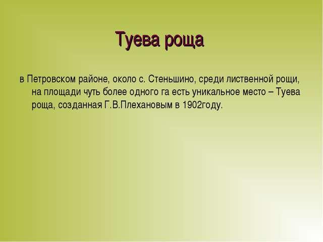 Туева роща в Петровском районе, около с. Стеньшино, среди лиственной рощи, на...
