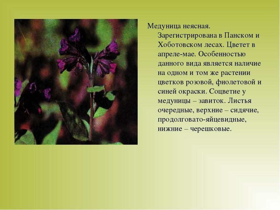 Медуница неясная. Зарегистрирована в Панском и Хоботовском лесах. Цветет в ап...