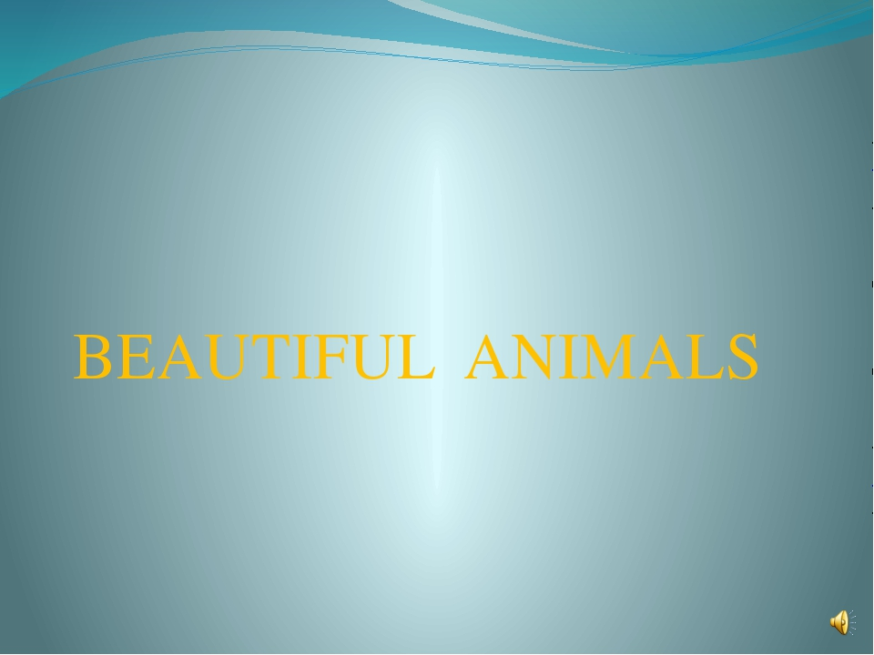BEAUTIFUL ANIMALS