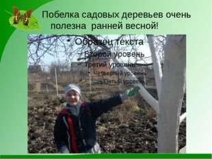 Побелка садовых деревьев очень полезна ранней весной!