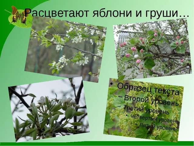 Расцветают яблони и груши…