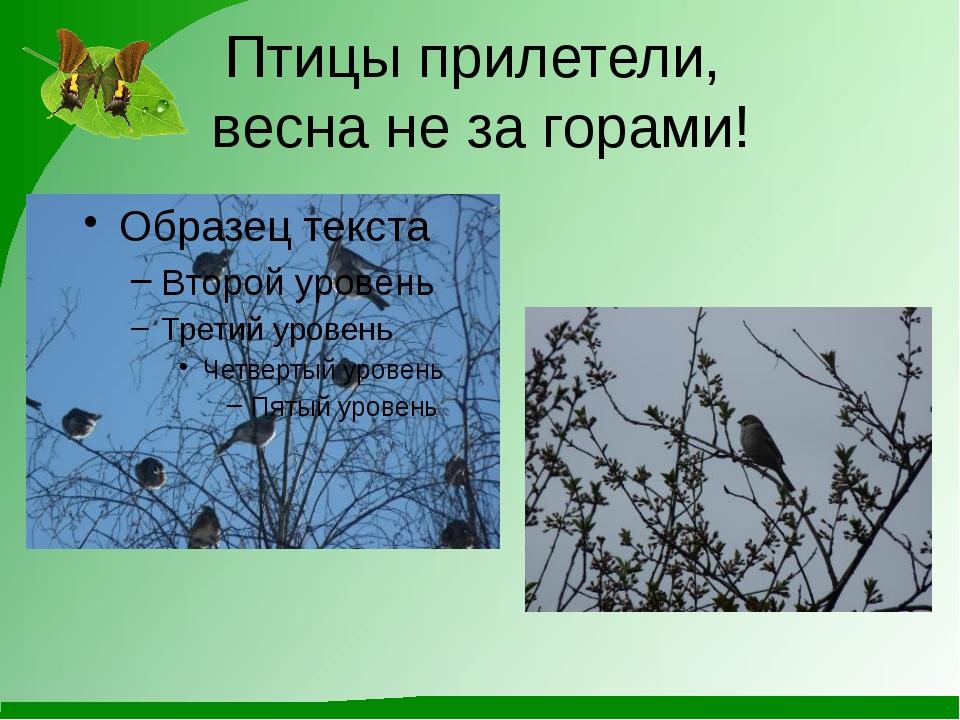 Птицы прилетели, весна не за горами!