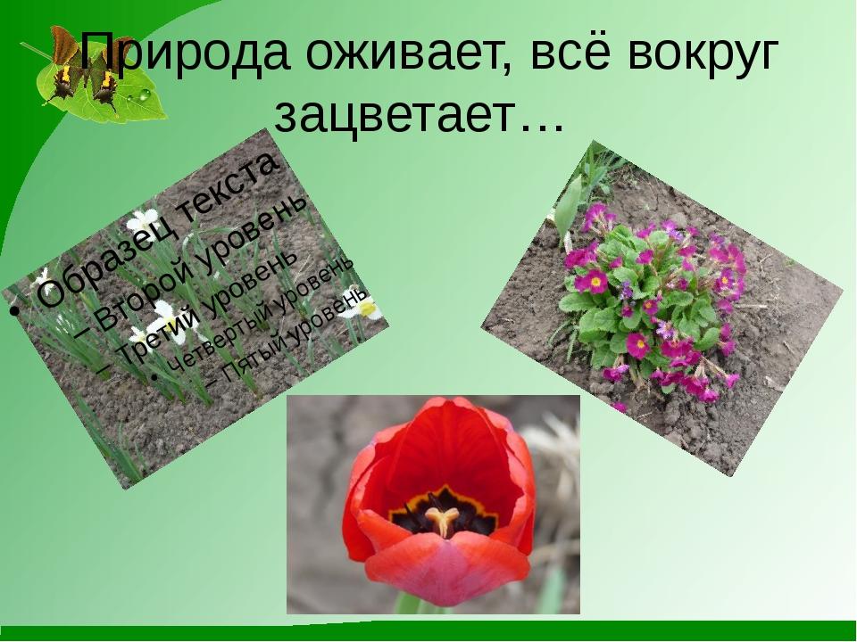 Природа оживает, всё вокруг зацветает…