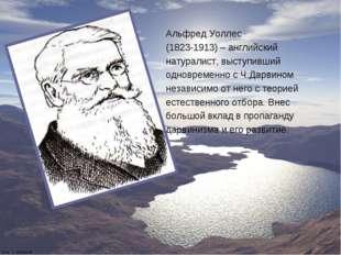 Альфред Уоллес (1823-1913) – английский натуралист, выступивший одновременно